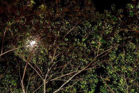 The moonlight above the tree and the light shining from under the tree