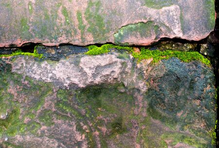 Freshness green moss growing on the moist stone in the rain forest