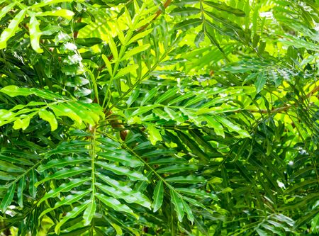 Surface texture on Leaves of ornamental plant as nature background Standard-Bild