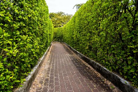 Brick walkway among tall tree walls