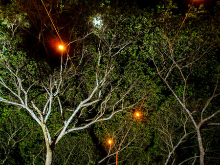 lighting on the lamp on cable under the big rain tree 写真素材