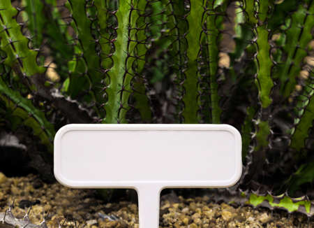 Blank plant tag label with succulent plant cactus Euphorbia greenwayi Foto de archivo