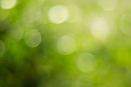 The gold sunlights and Green with yellow leaf bokeh on nature defocus abstract blur background. Abstract background yellow and green tones of natural outdoors bokeh Standard-Bild