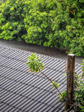 The rain fell on the old tile roof Standard-Bild