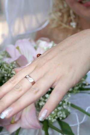 coccinella: ladybird on the bride hand