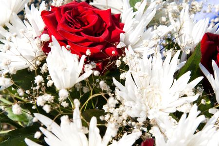 white asters and one red rose background photo
