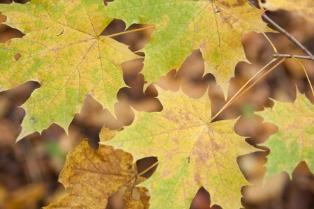 Colorful backround image of fallen autumn leaves photo