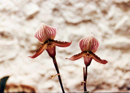 orchidea: Orchidea  3