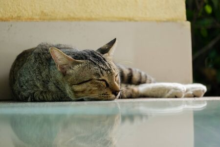 small cat sleeping under the roof at noon