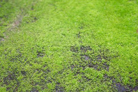 Stones with moss photo