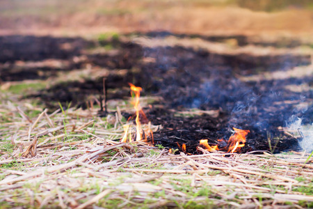 Prairie fire, fire burning dry grass 版權商用圖片