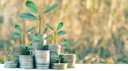 Growthing money on nature blur background