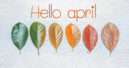 Hello april text on white wooden with Leaf color change