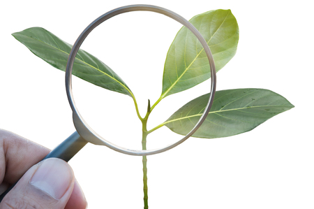 Magnifying glass of growthing plant of tree
