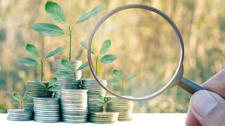 Magnifier searching investment growing money of tree leaf infestation 版權商用圖片