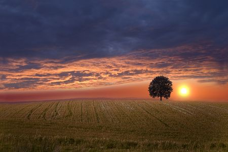 Field and sky with single tree at beautiful sundown scenery. Stock Photo