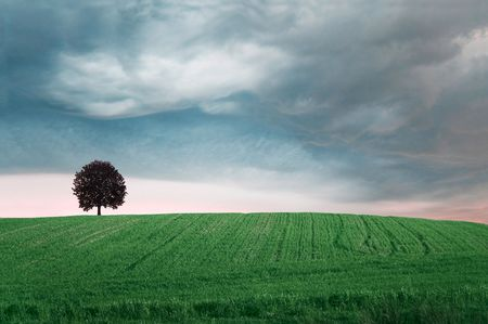 Storm clouds over field with green grass and tree. photo
