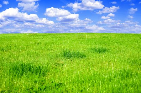 Grassy field conceptual image. Grassy field in summer. Stock Photo