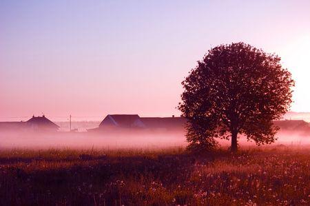 Sunrise. Picture of sunrise in summer rural.