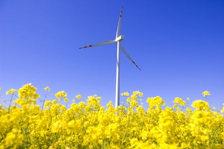 beetwen: Windmill conceptual image. Windmill beetwen yellow flowers in summer. Stock Photo