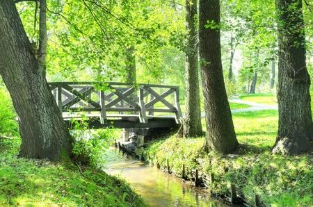 Rural landscape. Green park at summer.