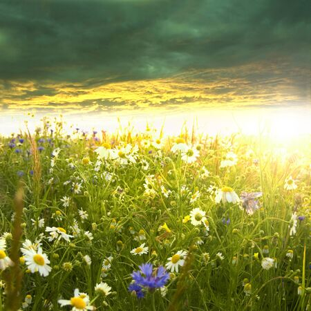 Beautiful spring landscape. Green meadow full of flowers at summer sunrise. Zdjęcie Seryjne - 9739690