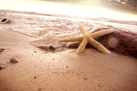 Starfish in sea water on the beach.