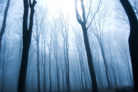 Nature. Fog in dark forest.