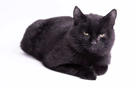 superstitions: Superstitions  Dirty black cat on isolated background