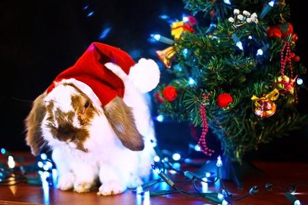 Christmas conceptual image. Christmas rabbit and christmas tree. photo