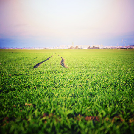 agglomeration: Green field with fresh grass and agglomeration in the distance.