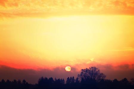 Sunrise over trees. Nature conceptual image. photo