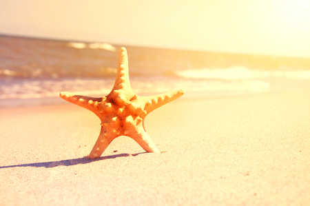sunny sky: Marine life. Starfish on the sunny beach. Stock Photo