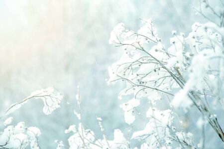 White winter background. Branches covered with snow. photo