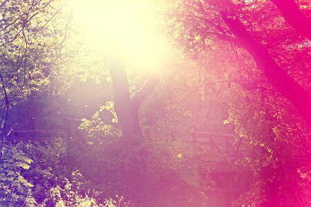 Abstract sunburst vintage summer background. Blurred  vintage forest.