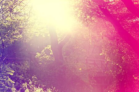 Abstract sunburst vintage summer background. Blurred  vintage forest.