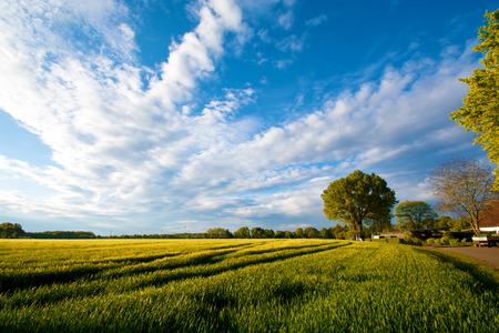 Summer field with green trees. Nature concept. Stock Photo
