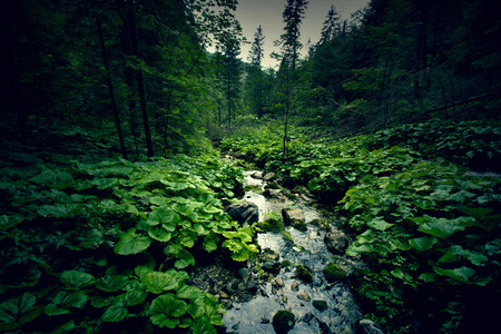 Dark green forest and river. Wilderness and nature.