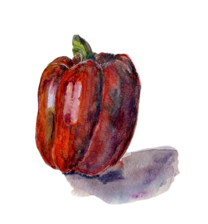 Red bell pepper. Hand drawn watercolor painting on white background,