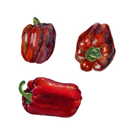 Set of Red bell pepper. Hand drawn watercolor painting on white background, Organic food illustration.