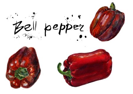 Set of Red bell pepper. Hand drawn sketch watercolor painting on white background, Organic food illustration.