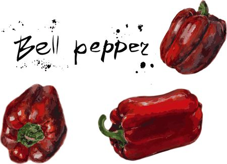 Set of Vector Red bell pepper. Hand drawn sketch watercolor painting on white background, Organic food illustration. Фото со стока