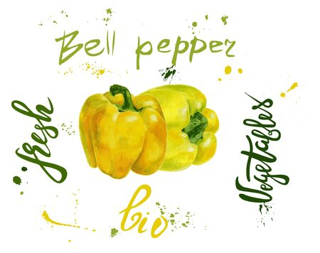 Set of yellow vector bell pepper. Hand drawn watercolor painting on white background, Organic food illustration. Lettering bio, fresh, pepper