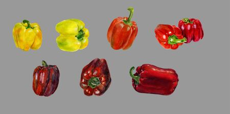 Set of yellow and red bell pepper. Hand drawn watercolor painting on gray background, Organic food illustration.