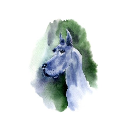 Watercolor dog - a symbol of 2018. Illustration of a dog.