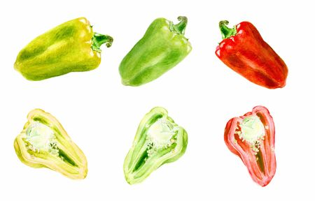 Set of watercolor vegetable bell pepper closeup isolated on white background. Фото со стока
