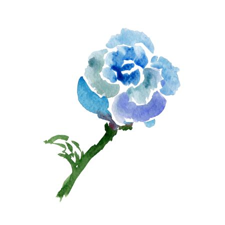 Sketch of blue rose. Watercolor flower, isolated on white - Illustration