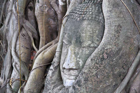 Old tree roots wrapped around buddha head in thailand photo