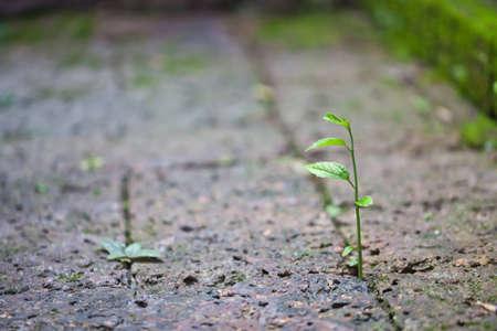 Little plant grow up on stone floor