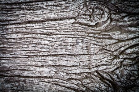 Grunge gray wood detail texture background  photo